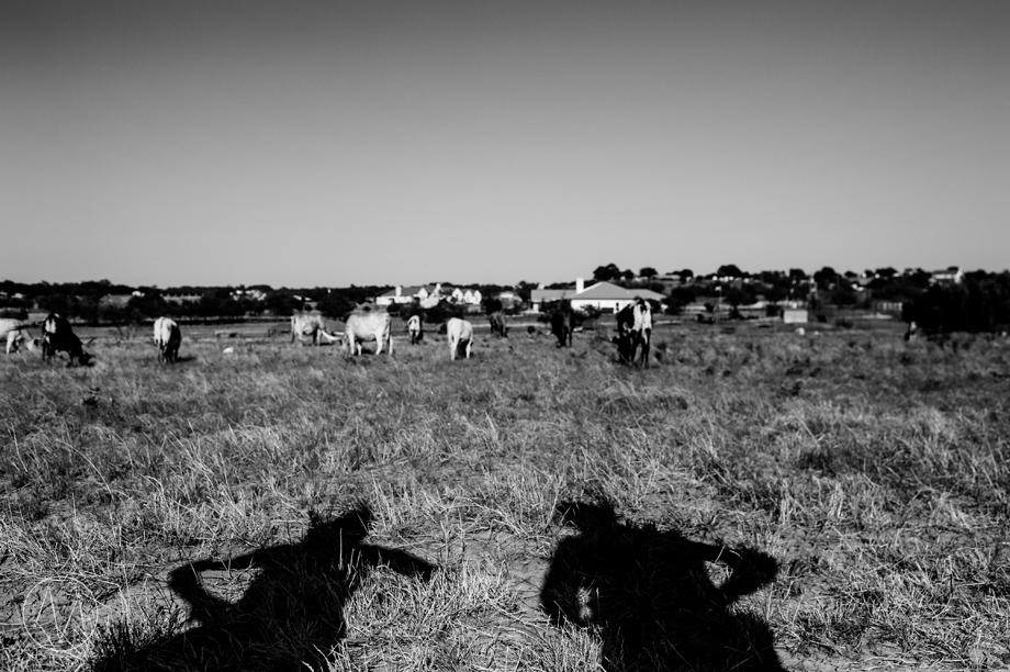 Texas Longhorn ranch family documentary in Celina TX (7)