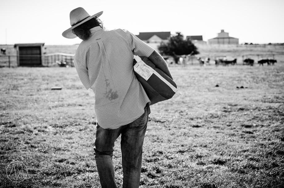 Texas Longhorn ranch family documentary in Celina TX (11)