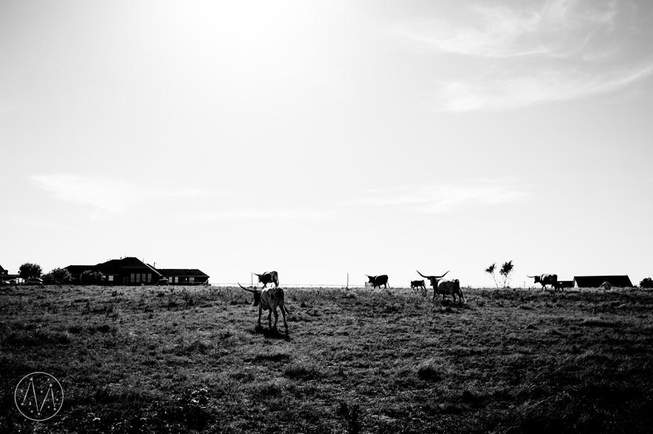Texas Longhorn ranch family documentary in Celina TX (12)