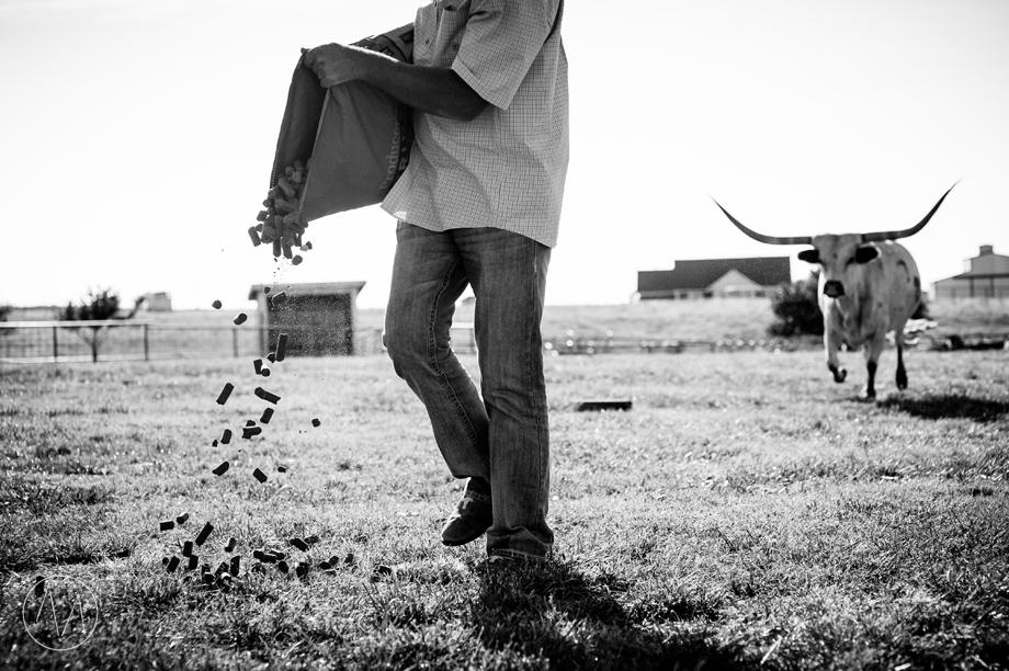 Texas Longhorn ranch family documentary in Celina TX (15)