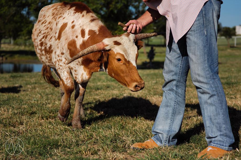 Texas Longhorn ranch family documentary in Celina TX (17)