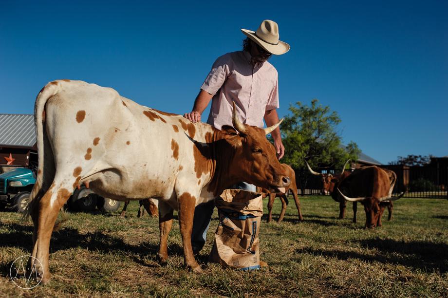 Texas Longhorn ranch family documentary in Celina TX (19)